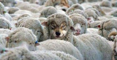 Recognize the wolf in sheep's coat!